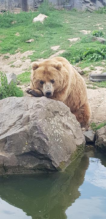 Bear, Zoo, Animal, Animal World, Mammal, Brown Bear