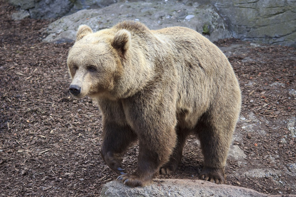 Bear, Teddy, Animal, Zoo