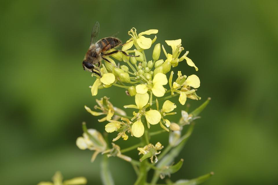 Bee, Bug, Animal, Flower, Plant