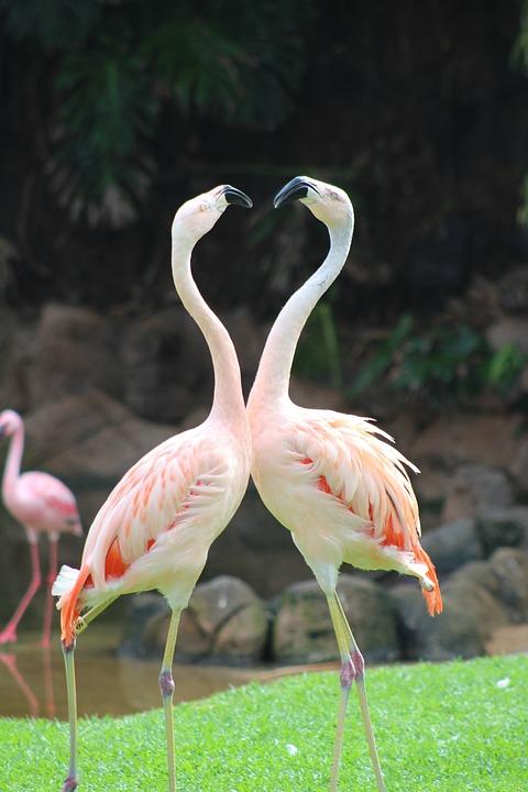 Pink Flamingo, Animal, Zoo, Bird, Nature, Animals