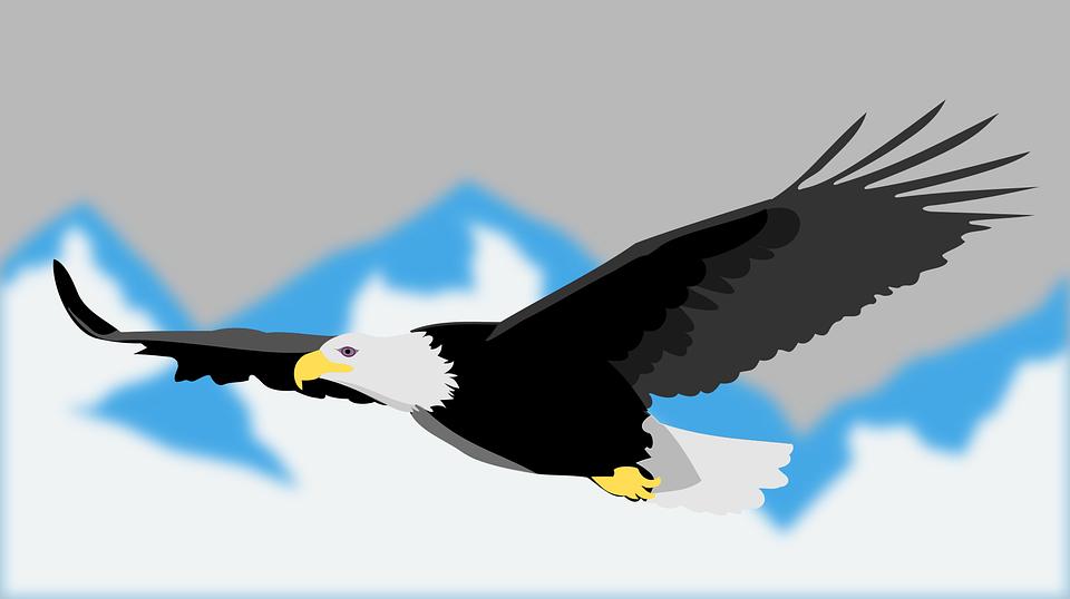 Animal, Bird, Eagle