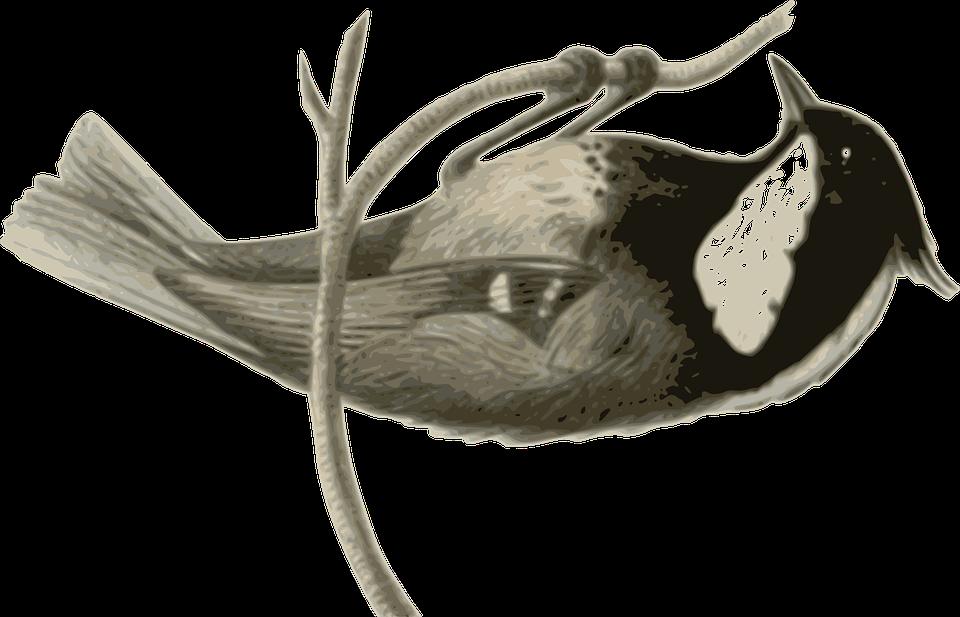 Bird, Feathers, Animal, Grey, Black, Sitting, Twig