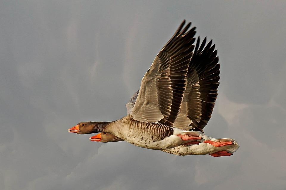 Bird, Animal World, Nature, Animal