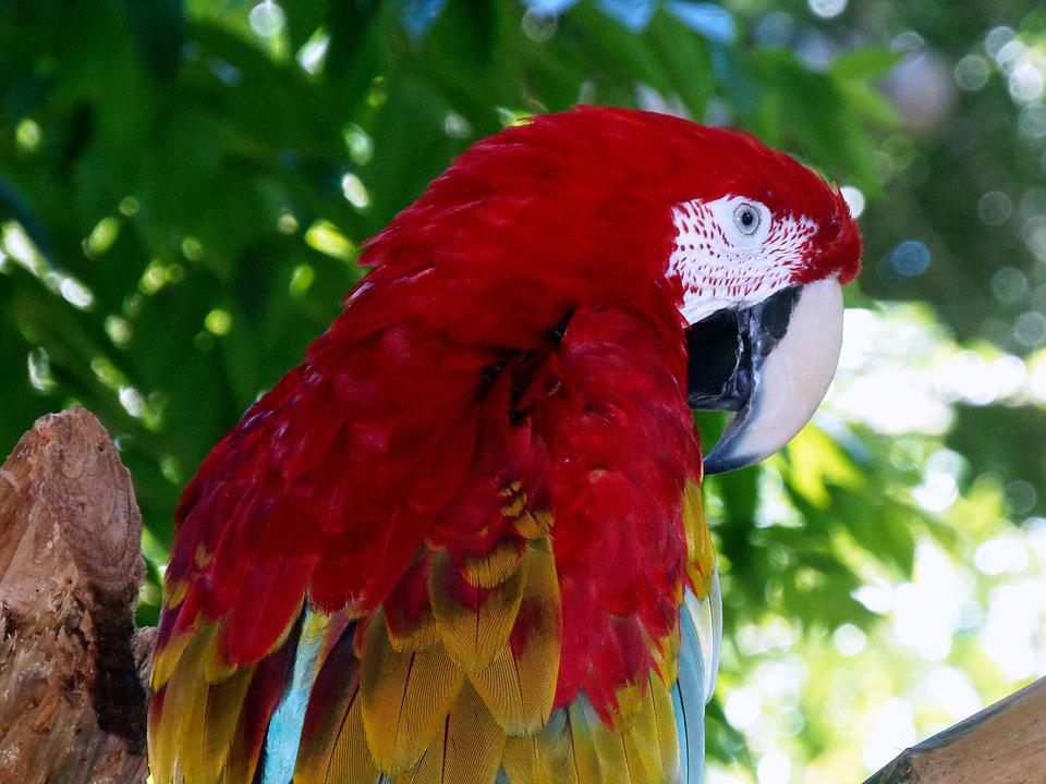 Beak, Bird, Red, Animal, Nature, Feather, Wildlife