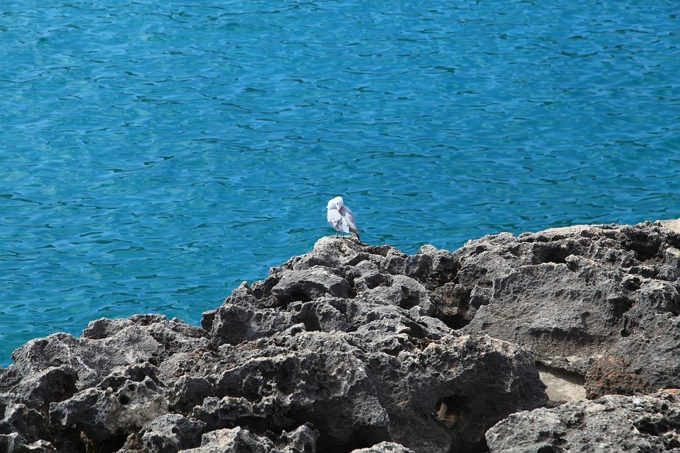 Seagull, Bird, Rocks, Ocean, Shore, Coast, Animal