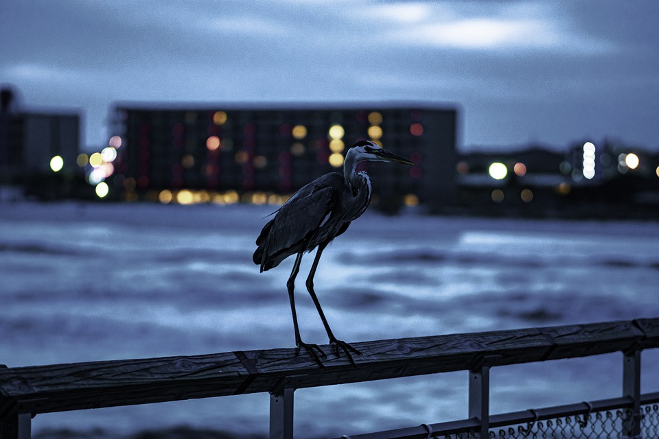 Bird, Ocean, Sea, Animal, Wildlife, Pelican, Ship, Sand