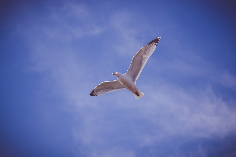 Blue, Sky, Bird, Animal, Fly