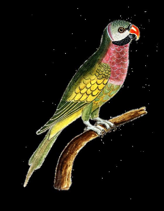 Parrot, Bird, Animal, Colorful, Vintage
