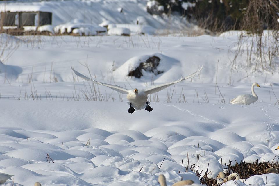 Animal, Lake, Waterside, Bird, Wild Birds, Waterfowl