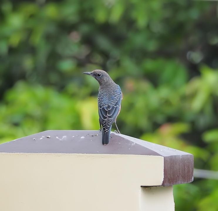 Bird, Wildlife, Nature, Animal, Outdoors, Wild, Avian