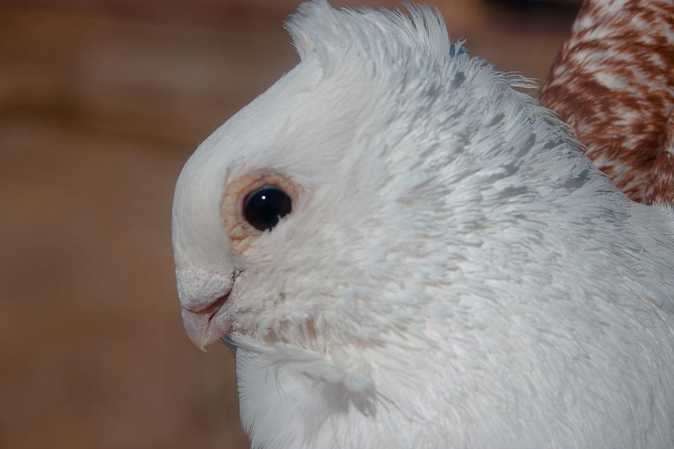 Pigeon, Animal, Bird, Animals, Wildlife Bird