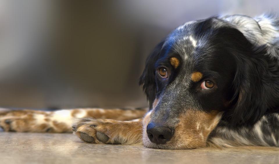 Dog, Pet, Animal, Cuddles, Love, Beast, Black And White