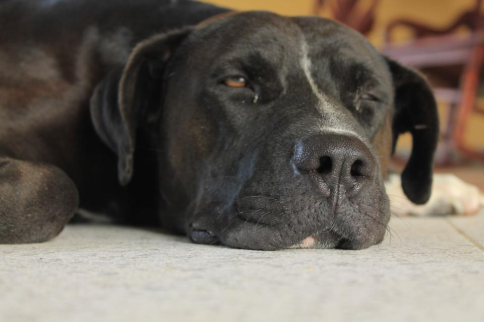 Dog, Look, Pet, Animal, Eyes, Puppy, Black Coat, Sad