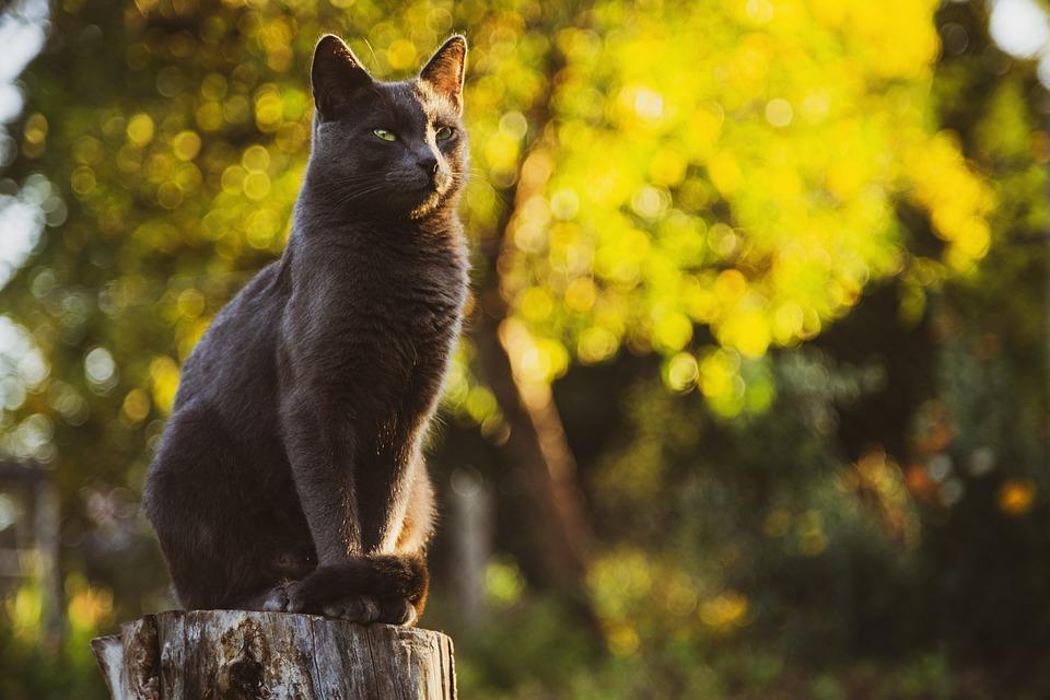 Cat, Grey, Pet, Animal, Black, Eyes, Domesticated