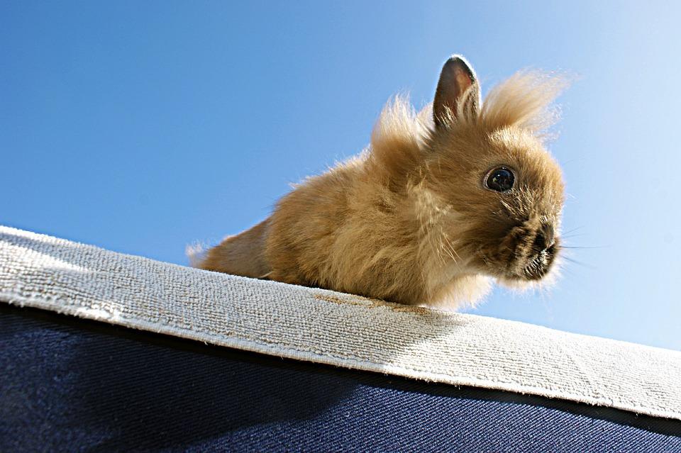 Rabbit, Brown, Animal, Wind, Blue, Beige