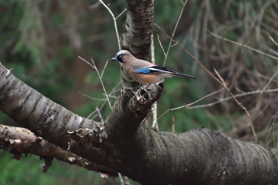 Natural, Wild Animals, Bird, Animal, Outdoors, Box