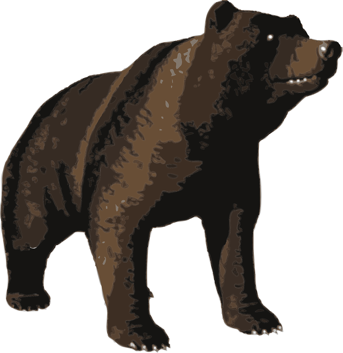 Animal, Bear, Brown, Nature, Grimly