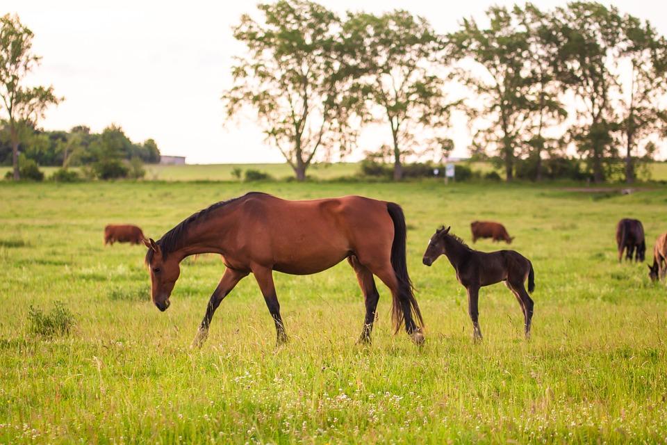 Horse, Brown, Animal, Pasture, Trees