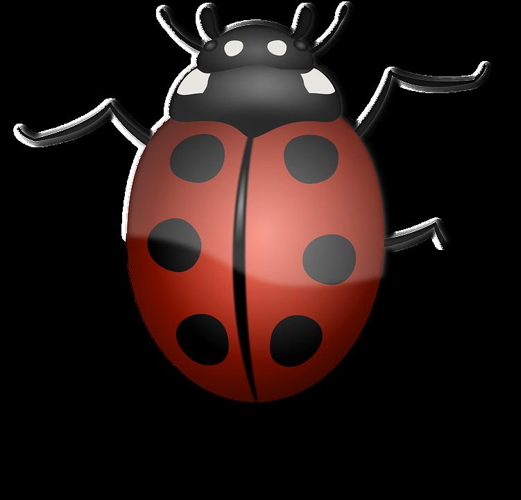 Ladybug, Animal, Beetle, Bug, Insect, Luck, Summer