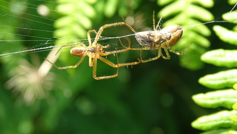 Spin, Web, Prey, Macro, Bug, Nature, Animal, Legs
