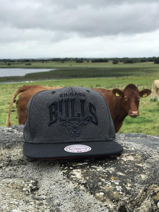 Cap, Bulls, Ireland, Funny, Cow, Cattle, Animal, Beef