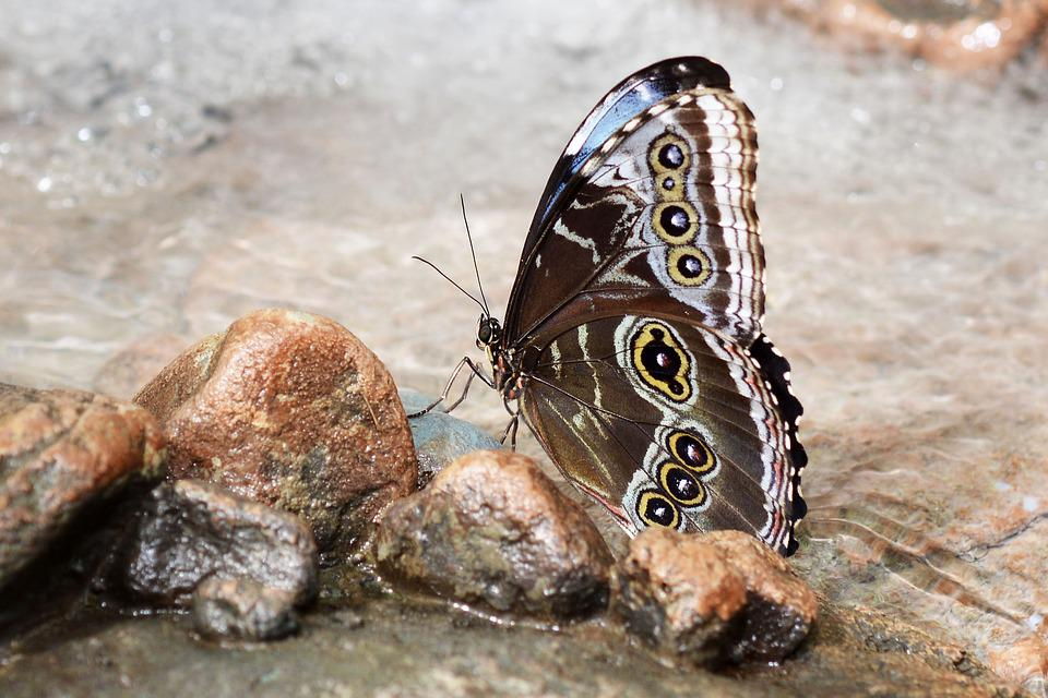 Butterfly, Insect, Wing, Fly, Animal, Black, Brown
