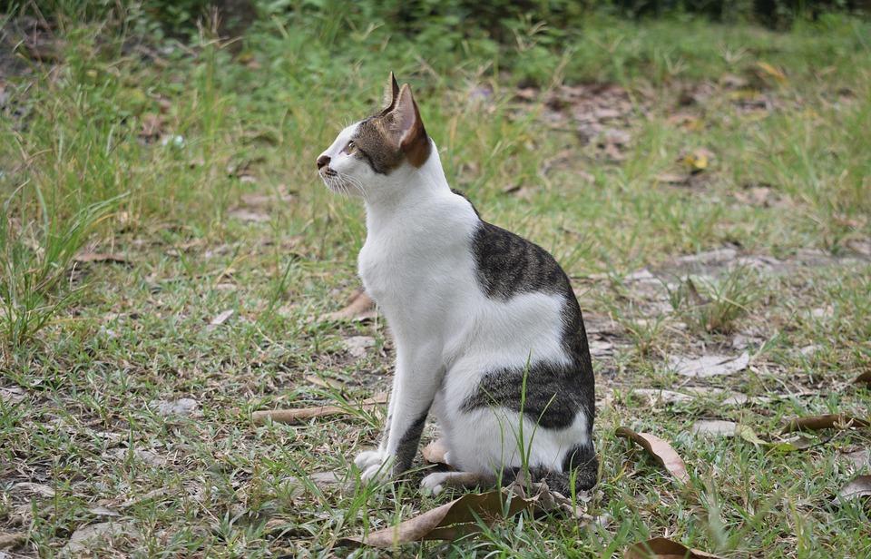 Cat, Animal, Pet, Adorable, Mammal