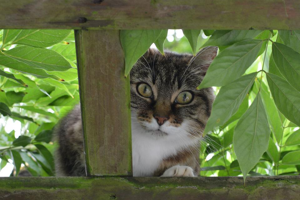 Cat, Animal, Curious, Cats, Pet
