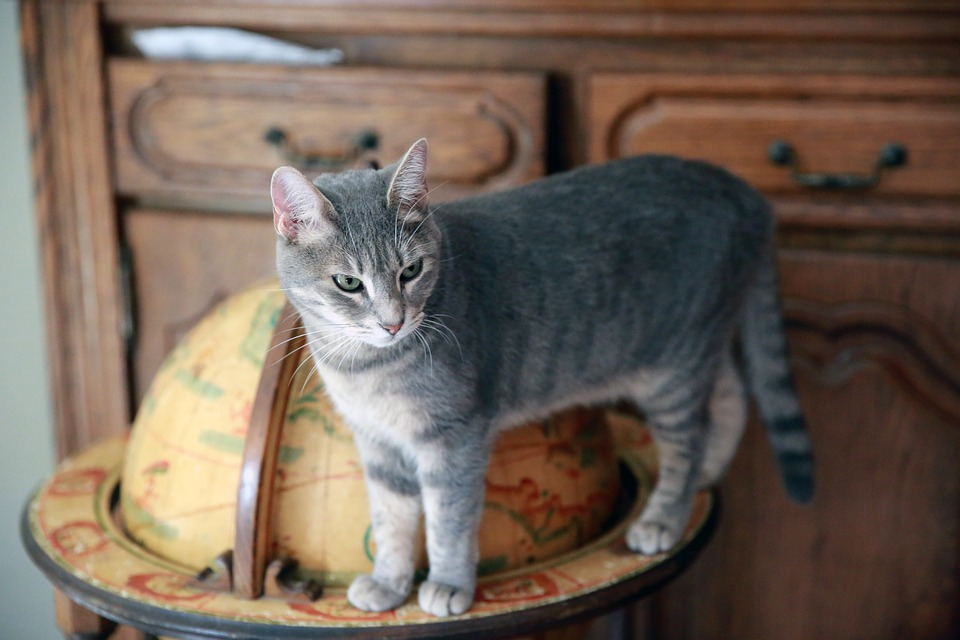 Animal, Fart, Pet, Domestic Animal, Feline, Cat