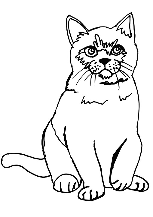 Cat, Fluffy, Coloring Page, Coloring, Cute, Animal, Pet