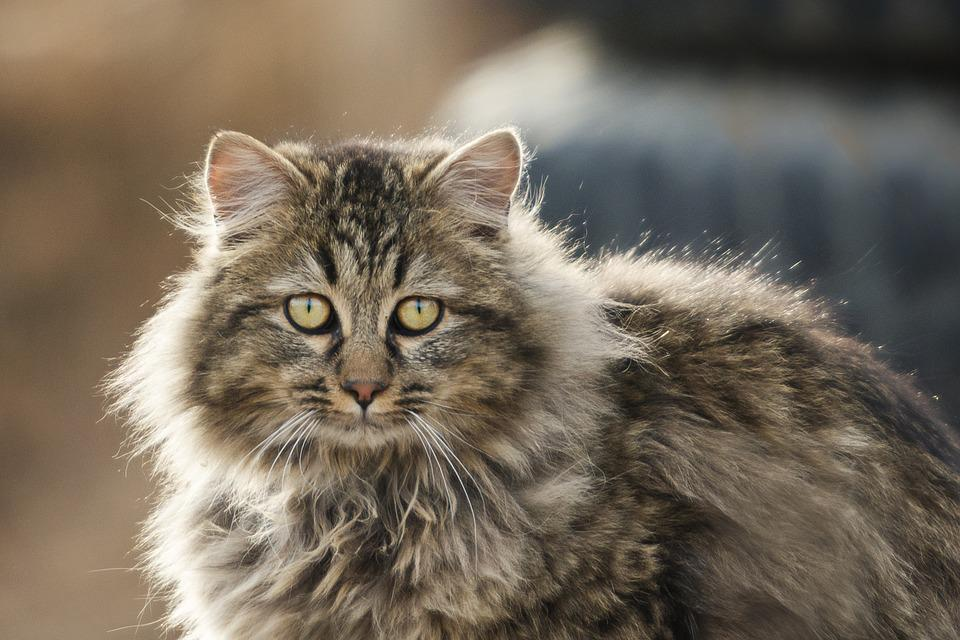 Animal, Cute, Cat, Nature
