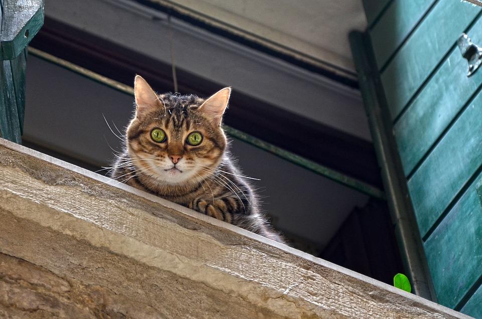 Cat, Window Sill, Window, Mackerel, Animal, Pet