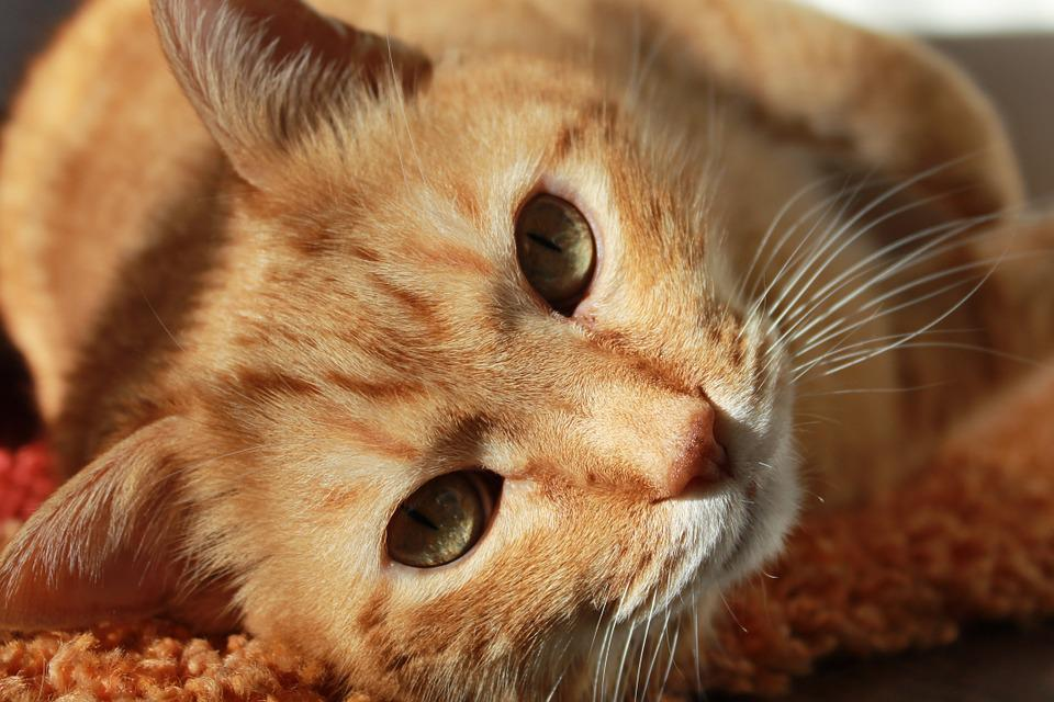 Cat, Friend, Animal, Pets