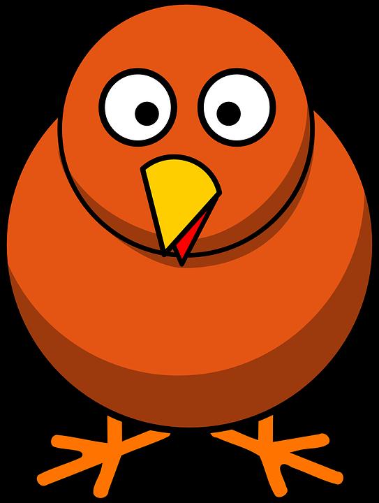 Chicken, Animal, Farm, Bird, Poultry, Hen, Isolated