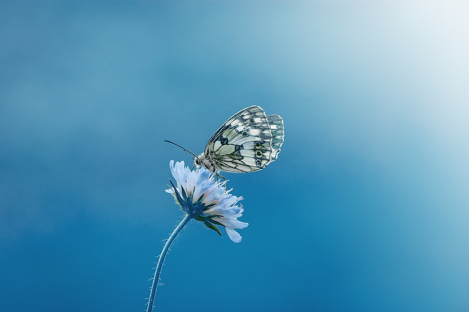 Butterfly, Animal, Insect, Close Up