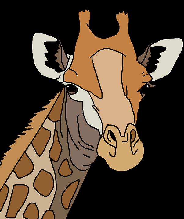 Africa, Animal, Colorful, Giraffe, Tall