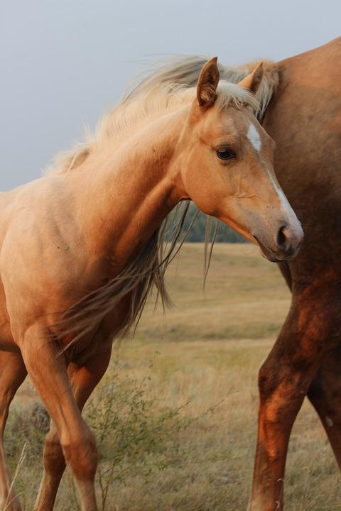 Mammal, Horse, Mare, Animal, Pasture, Colt, Filly