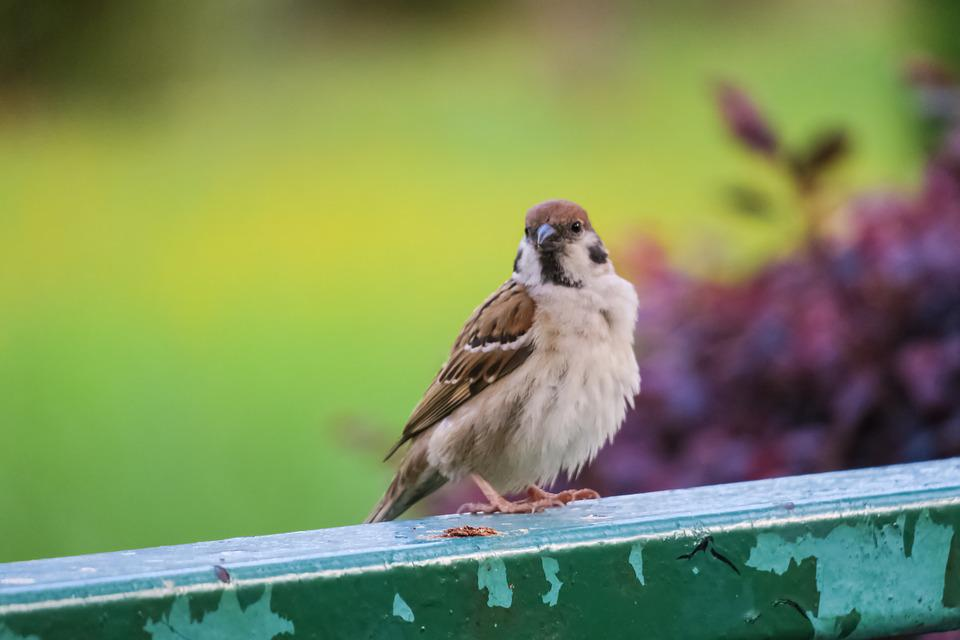 Bird, Nature, Outdoor, Wildlife, Animal, Compact, Wings