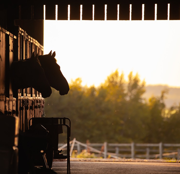 Equestrian, Horse, Competition, Riding, Animal, Equine