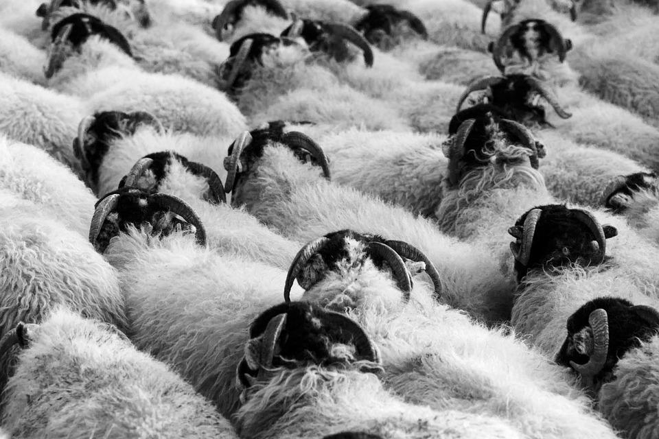 Agriculture, Animal, Countryside, Crowd, Farm, Farming