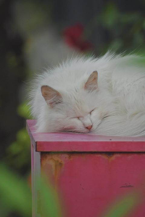 Cat, Cute, Animal, Fur, Sleeping, Kitten, Red, Sweet