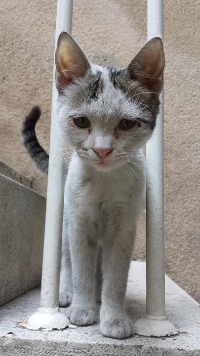 Cat, Animal, Portrait, Mammal, Cute