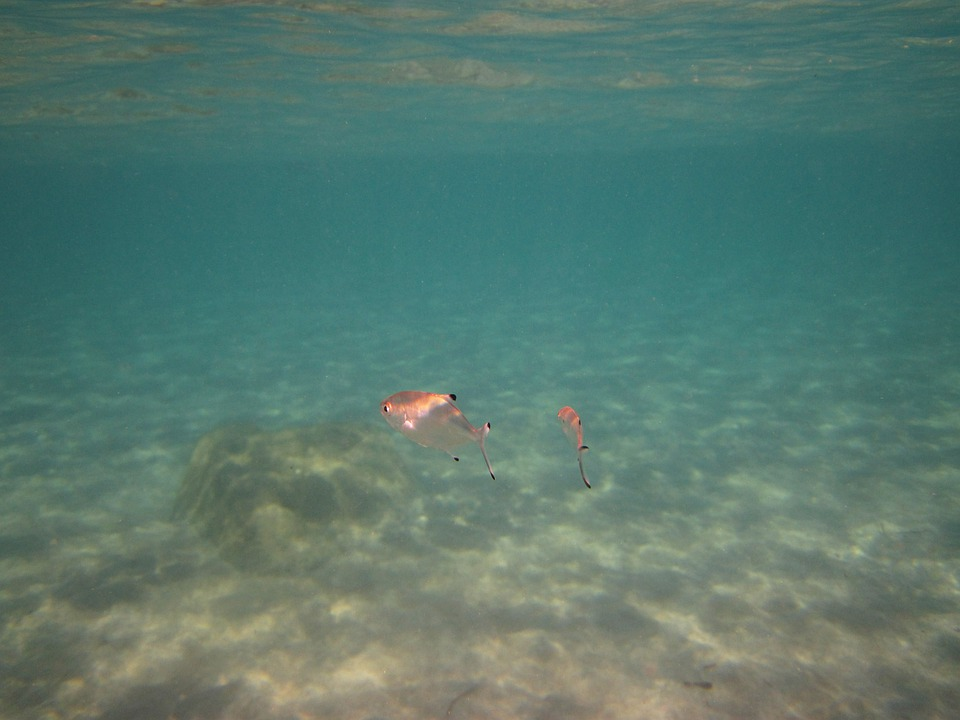 Animal, Blue, Deep, Dive, Diving, Fish, Marine, Nature