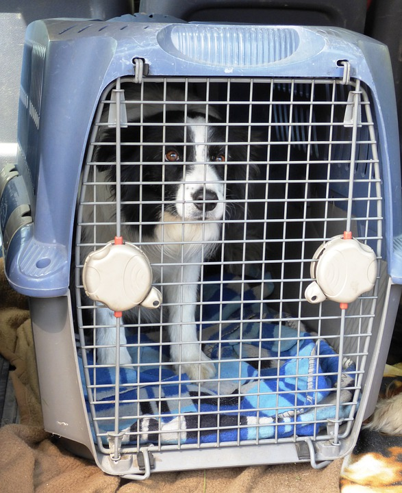 Dog, Doggy, Breed, Thoroughbred, Border, Cage, Animal