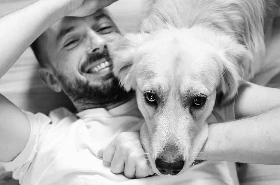 Man, Human, Dog, Love, Friendship, Animal, Golden