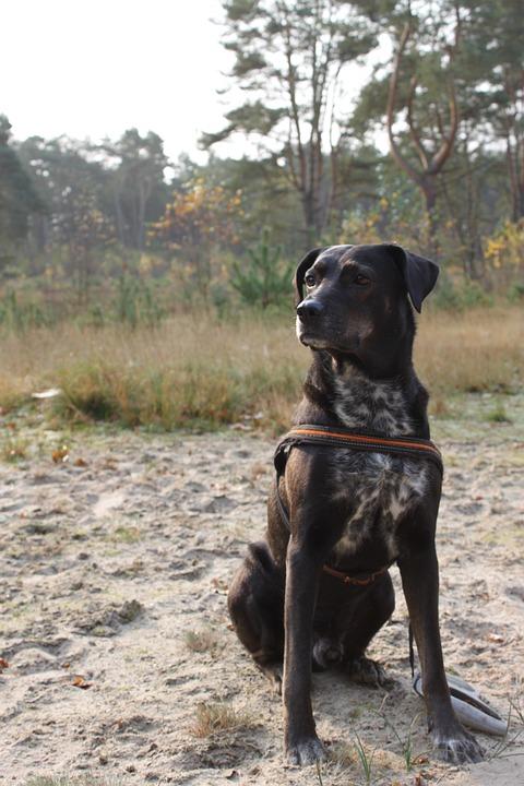 Animal, Holm, Dog, Nature
