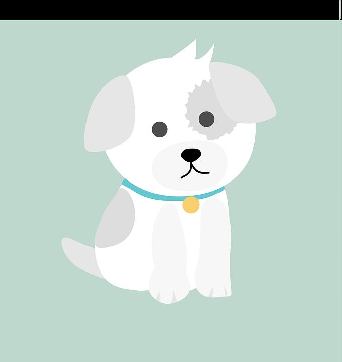 Animal, Dogs, Cute