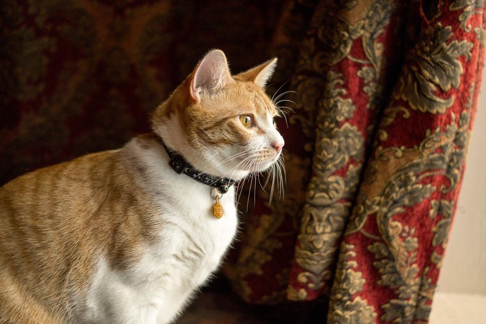 Cat, Kitty, An, Animal, Pet, Kitten, Domestic, Feline