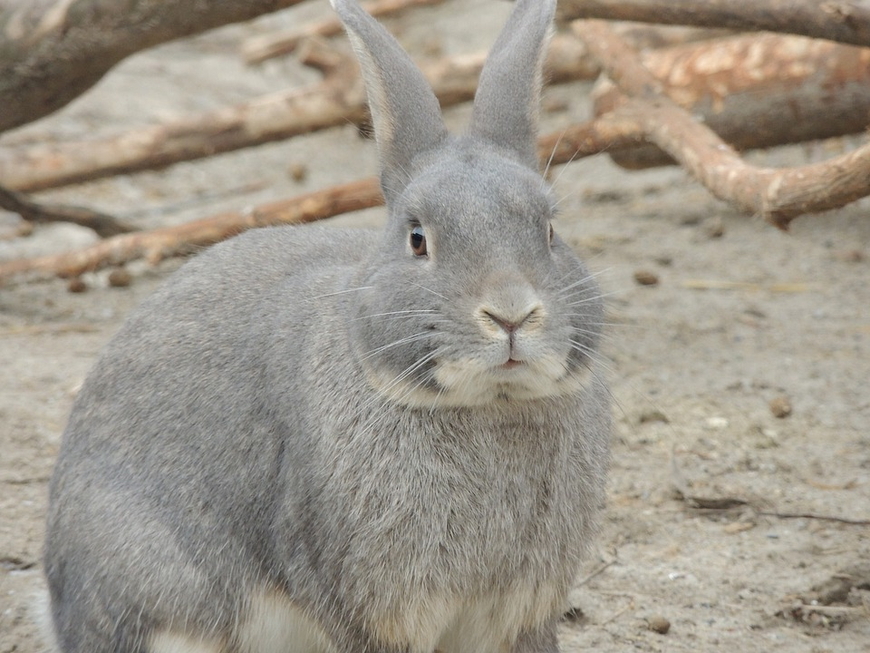 Hare, Gray Hare, Animal, Easter