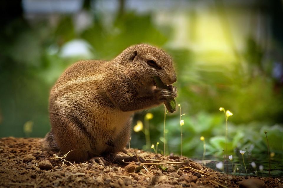 Squirrel, Eating Squirrel, Sweet, Cute, Animal